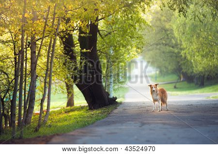 Dog Walking In The Spring Park