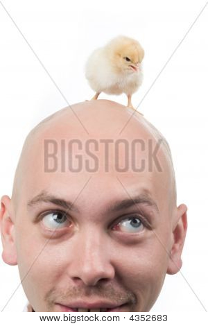 Baby Bird On Head