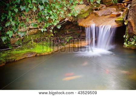 Waterfall spilling into coy fish or goldfish pond