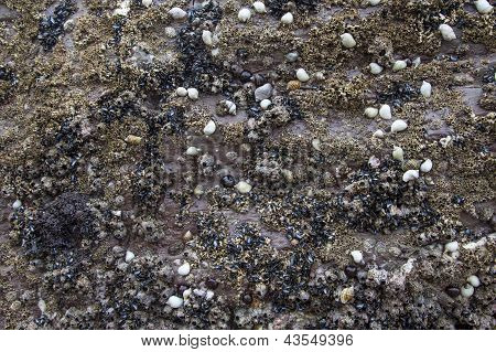 Shells / Rock Background Texture - Nature Abstract.
