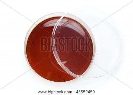 A Petri Dish, On White Background