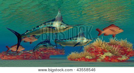 Marlin Recife