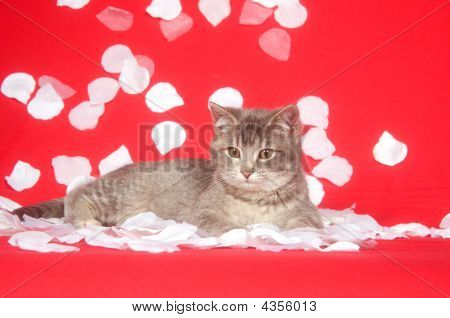 Kitten And Rose Petals