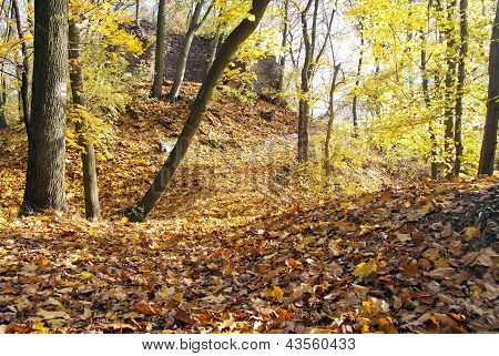 autumnal view of deciduous forest and forest way with ruin wall