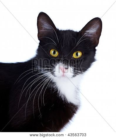 Portrait Of A Black-and-white Cat With Yellow Eyes.