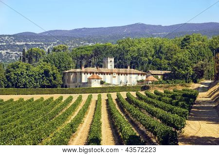 Old House And Vineyard In The Region Of Luberon, France