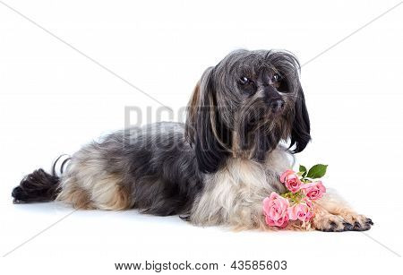 Decorative Doggie And Roses.