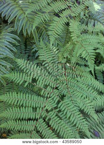 Folha de samambaia verde fresco