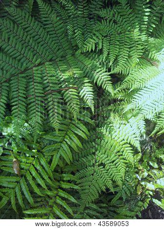 Natureza verde Nova Zelândia Fern