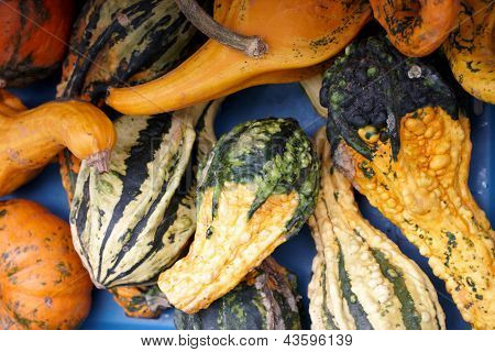 A Variety Of Marrows