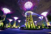 stock photo of garden sculpture  - Night view of The Supertree Grove at Gardens - JPG