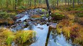 picture of inari  - Mountain brook in Inari mountains bog area - JPG