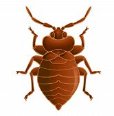 foto of temperance  - Vector image of simbol of brown bedbug - JPG