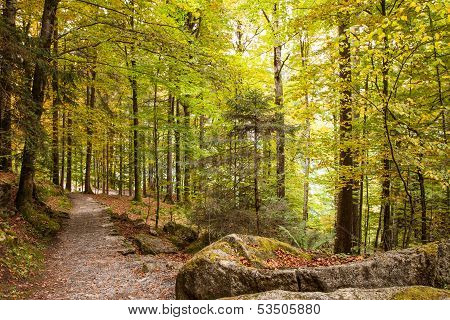 Pathway Throught The Beautiful Autumn Forest Near Brienz