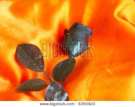 Black Rose with orange background