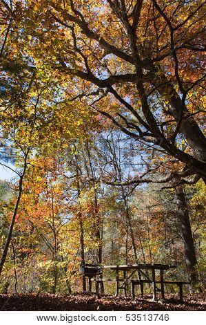 Picnic In Autumn