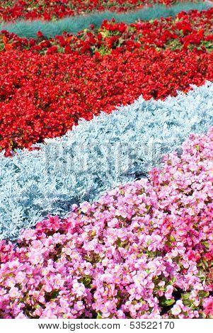 Gardens In Russia