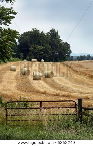 Hay Gate