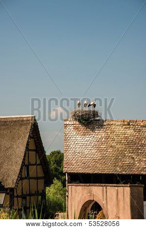 Stork nest on house roof, France