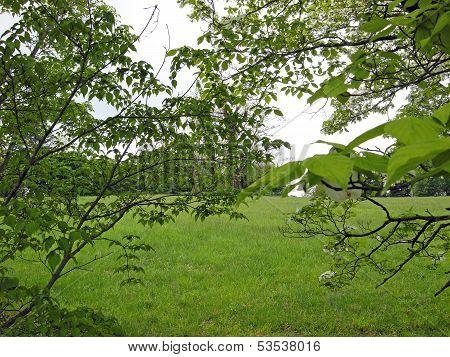 Trees # 1