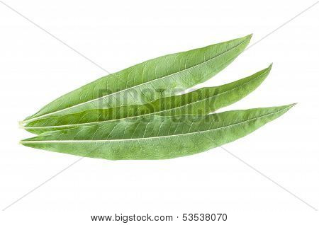 Fireweed Leaves