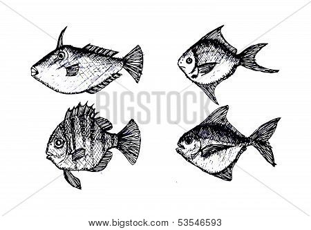 hand drawn fish Vector illustration