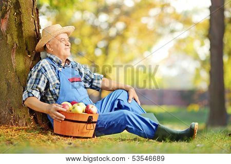 Male worker in dungarees with basket full of harvested apples sitting in orchard