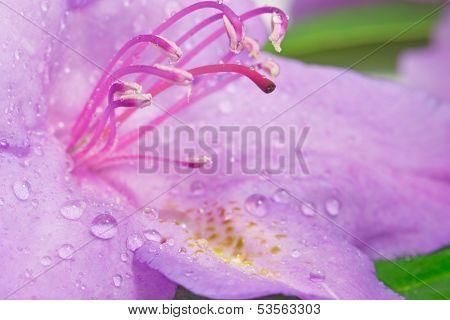 Flower pistils with raindrops