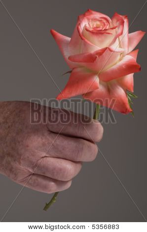 Senior Hand Holding Rose