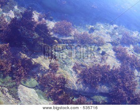 Underwater Seaweed