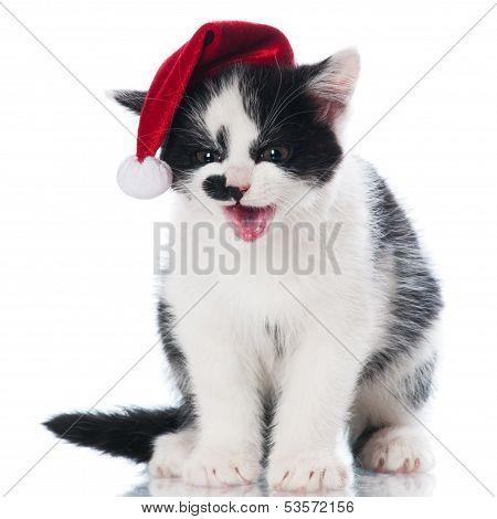 adorable kitten in a santa hat