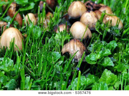 Fungi 2 09