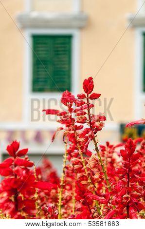 Red Flowers In Makarska