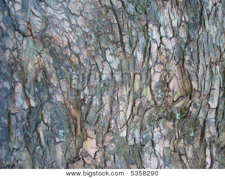 Pohutukawa Bark