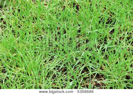 Wet Grass Background