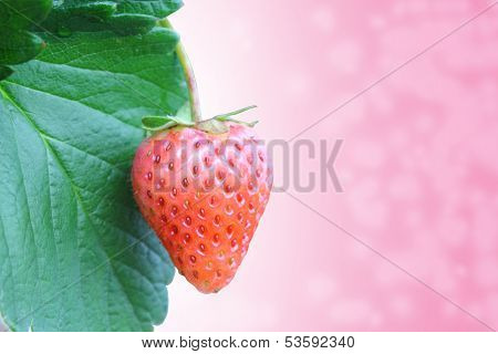Ripe Red Stawberries