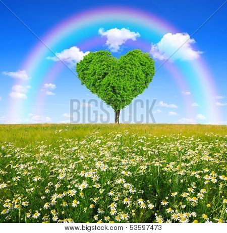field of marguerites with tree in the shape of heart  and rainbow
