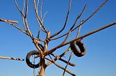 foto of tire swing  - Tree with rubber tires and rope for animals at the zoo - JPG