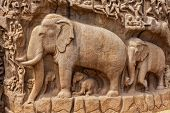 Elephants on descent of the Ganges and Arjuna's Penance ancient stone sculpture - monument at Mahaba