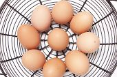 pic of chicken-wire  - Free range eggs in wire basket with white background - JPG
