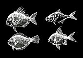 foto of loach  - an images of  hand drawn fish Vector illustration - JPG