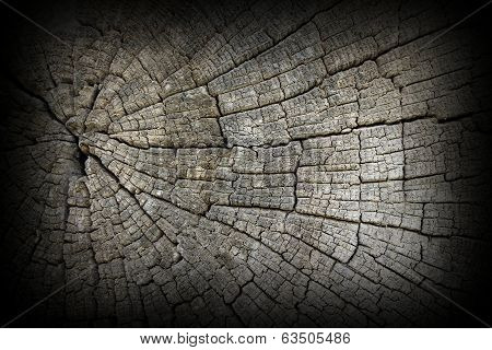 Cracks On Old Oak Wood Surface