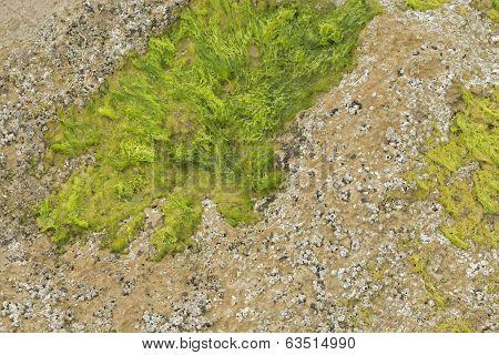 Texture-algae
