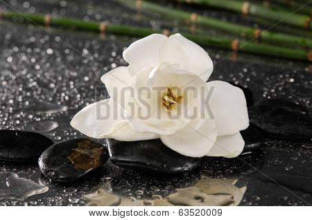 spa concept �¢�?�?gardenia flower with thin bamboo grove