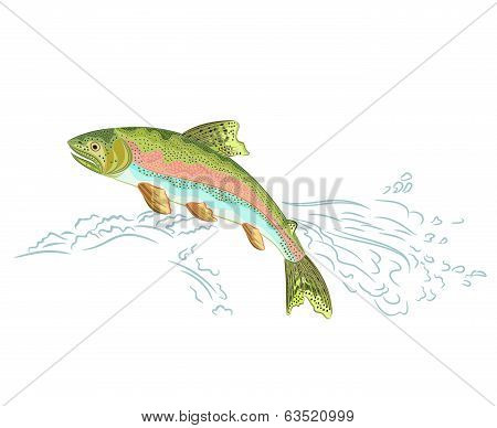 American Trout Jumps Over The Weir