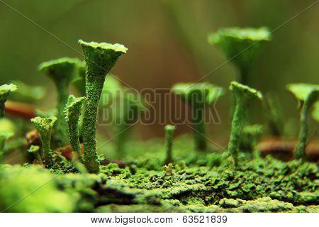 tubular moss in the macro