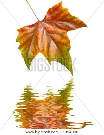 Beautiful Golden Leaves In Autumn