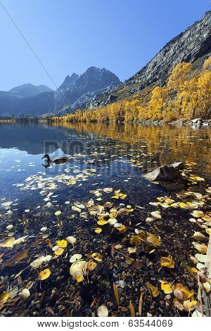 Reflection Of Mountains, Aspens, And Duck