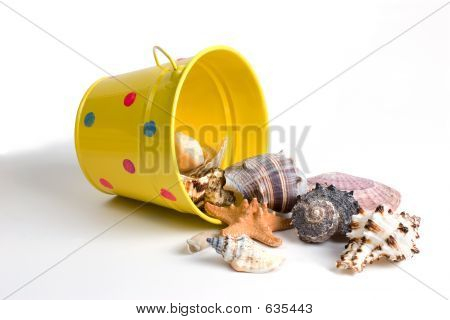 Bucket Of Seashells