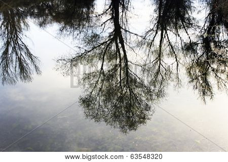 Trees Reflecting In The Water